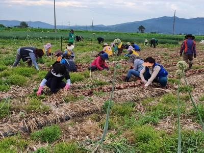 농촌일손돕기 자원봉사활동[2]